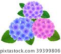 수국의 꽃 39399806