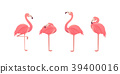 flamingo vector pink 39400016