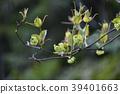 청미래 덩굴의 꽃 39401663