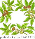 anise, herb, leaf 39411313