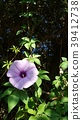 花朵 花卉 花 39412738