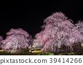 라이트 업, 매화, 봄 39414266