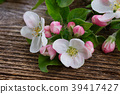 Apple tree blossom 39417427