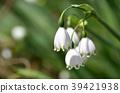 雪花 花朵 花卉 39421938