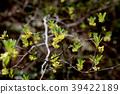 꽃, 플라워, 식물 39422189