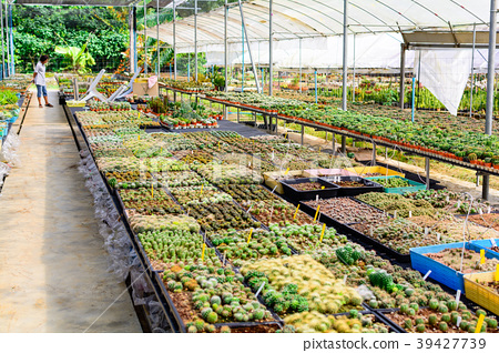 Cactus tree shop with breeding  39427739