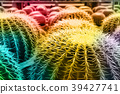 cactus colorful pattern 39427741