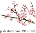 Somei Yoshino branch and flowers painted by watercolor 39428124