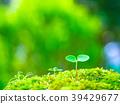 식물의 싹 39429677