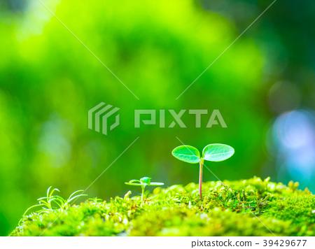 植物幼苗 39429677