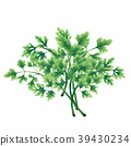 Illustration of a green parsley bunch 39430234