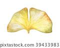 Autumn ginkgo leaf 39433983