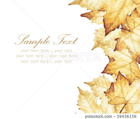 Maple leaves with place for text 39436156