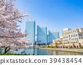 요코하마, 벚꽃, 거리 39438454