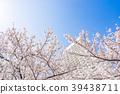 [가나가와 현] 만개 한 벚꽃 39438711