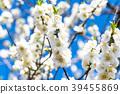 桃花 花朵 花 39455869