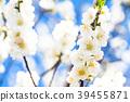 桃花 花朵 花 39455871