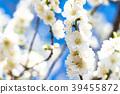 桃花 花朵 花 39455872