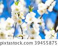 桃花 花朵 花 39455875