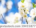 桃花 花朵 花 39455877
