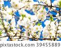 桃花 花朵 花 39455889