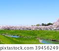 봄, 화창한 날 芝川 39456249