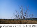 푸른 하늘 아래의 고목과 철교 JR 가와 고 에선 入間川 교량 b 광각 39460399