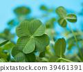 네 잎 클로버 39461391