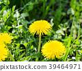 花朵 花卉 花 39464971