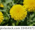 花朵 花卉 花 39464973