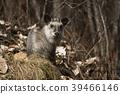 สัตว์ป่า,สัตว์,ภาพวาดมือ สัตว์ 39466146