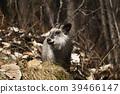 สัตว์ป่า,สัตว์,ภาพวาดมือ สัตว์ 39466147