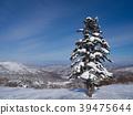 새로 내린 눈과 푸른 하늘 큰 침엽수가 서 홋카이도의 스키장의 풍경 39475644
