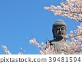盛開的櫻花和Ushiku Daibutsu 39481594