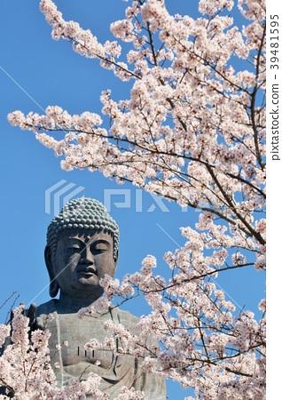 盛開的櫻花和Ushiku Daibutsu 39481595