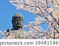 盛開的櫻花和Ushiku Daibutsu 39481596