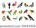 새, 조류, 일러스트 39483606