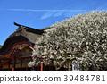 Dazaifu Tenmangu Shimmei 39484781