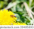 蜜蜂 花朵 花卉 39485693