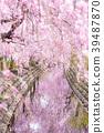尼卡素 樱花 樱桃树 39487870