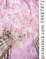 尼卡素 樱花 樱桃树 39487872