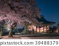 봄, 밤 벚꽃, 벚꽃 39488379