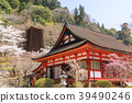 談山 신사의 벚꽃 39490246