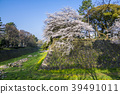 cherry blossom, cherry tree, stone wall 39491011