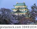 名古屋城堡 樱花 樱桃树 39491034