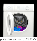 Cat after washing in a washing machine. Isolated 39493127