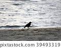 바다, 까마귀, 모래사장 39493319