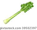 芹菜 水彩 水彩畫 39502397