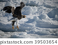 飛翔 冬天 冬 39503654