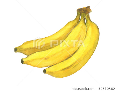 香蕉水彩插圖 39510382